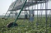 چقدر با کار مهندس کشاورزی و ساعت کاری او آشنایی دارید؟