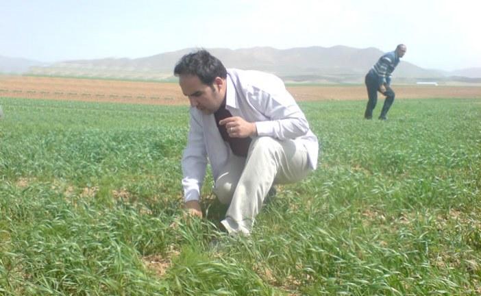 آشنایی با دانش گیاه پزشکی و کار گیاه پزشک