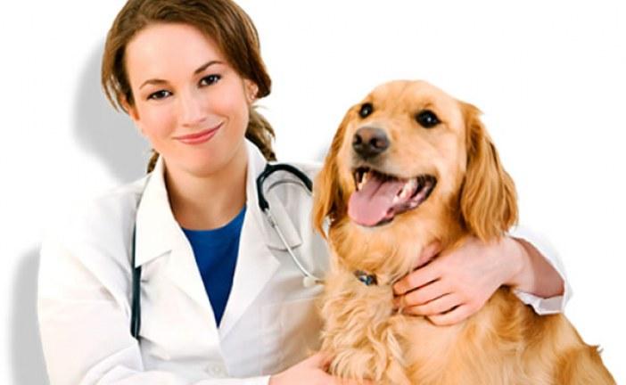 دامپزشکی و شرایط کار دامپزشک