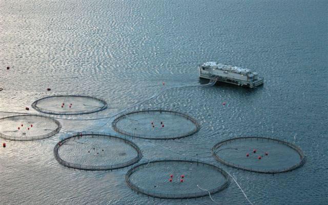 چگونه پرورش ماهی انجام دهم ؟ درآمد پرورش دهنده ماهی چقدر است؟